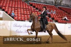 Saddle Seat Equitation 14 18 No Pattern 2018 Buckeye Sweepstakes