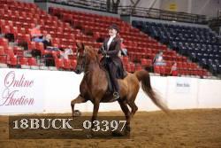 Saddle Seat Equitation 13 Under No Pattern 2018 Buckeye