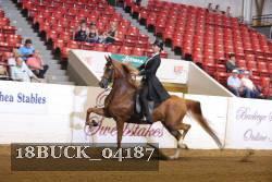 Saddle Seat Equitation Champ 14 18 Under Pattern 2018 Buckeye